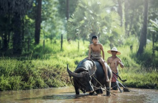 buffalo-1807517
