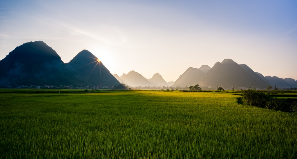 Rice paddies VN